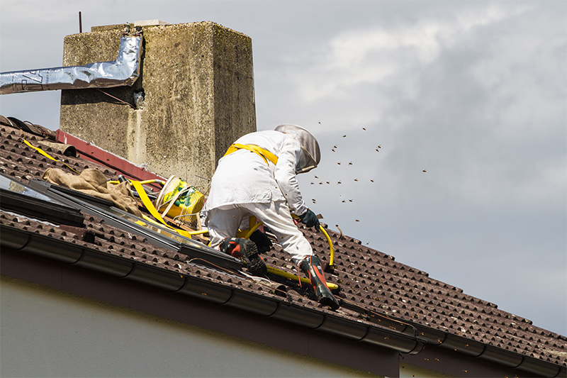 Bee Pest Control in Bath Somerset